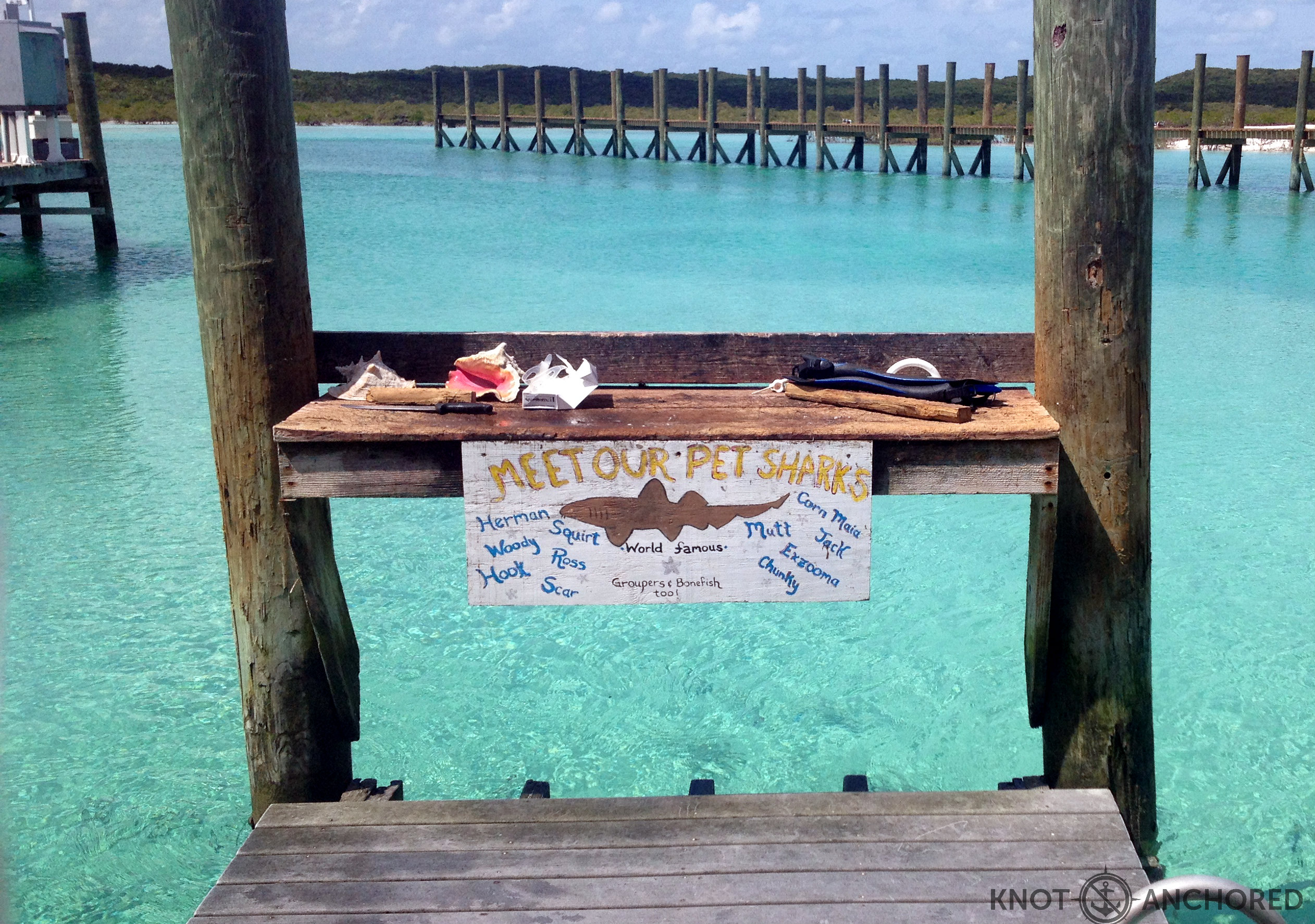 Pet Sharks eh? Who knew! Compass Cay, BAHAMAS – knot