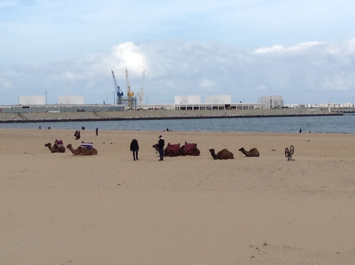 Camels, Tangiers beach, Morocco