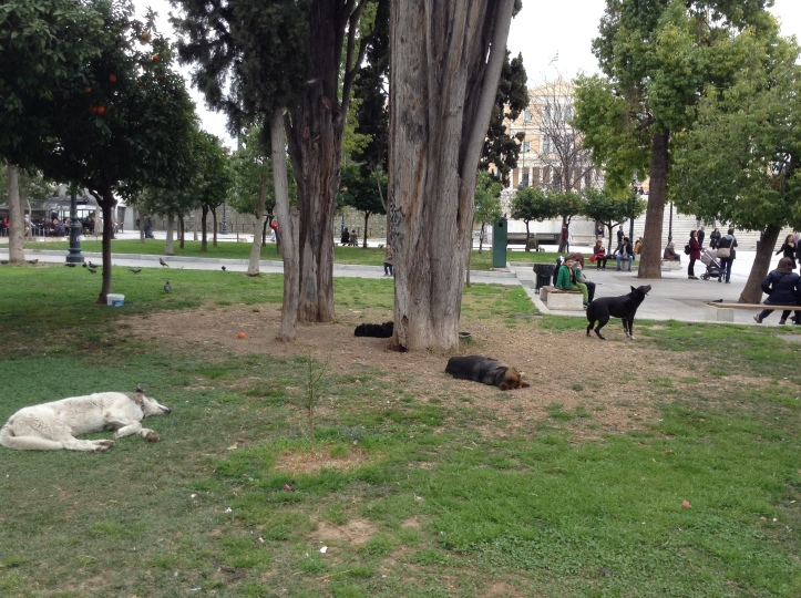 downtown park, sleeping dogs, Athens