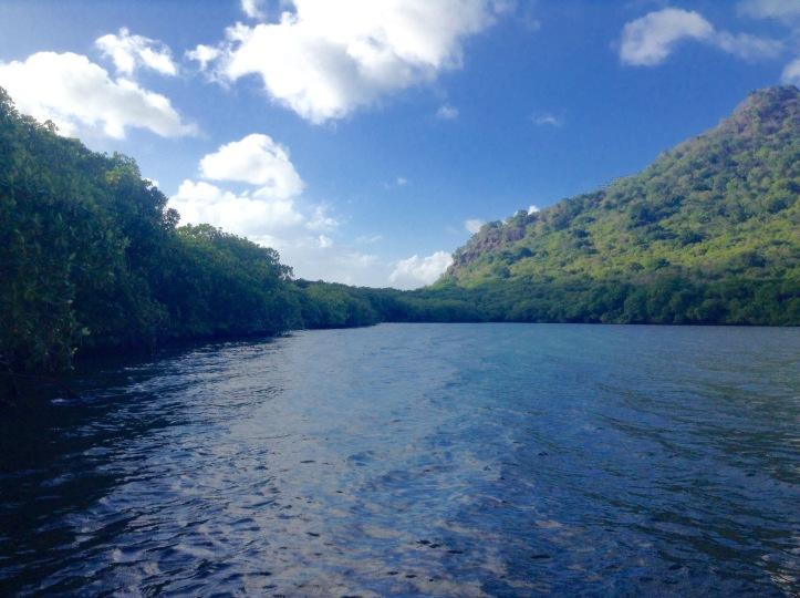 Mangroves, Tyrrel Bay