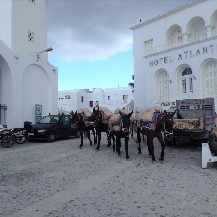 Santorini, donkeys, Thira