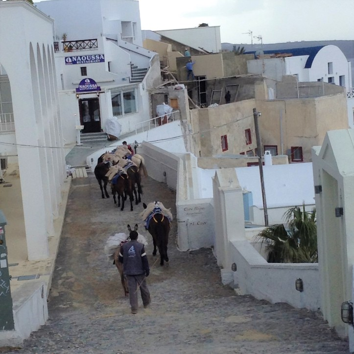 donkeys, Santorini, Greece, walkways