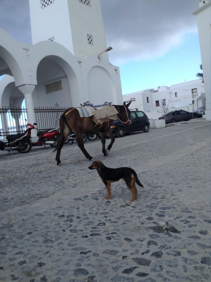donkeys, dog, construction site, Thira, Santorini, Greece