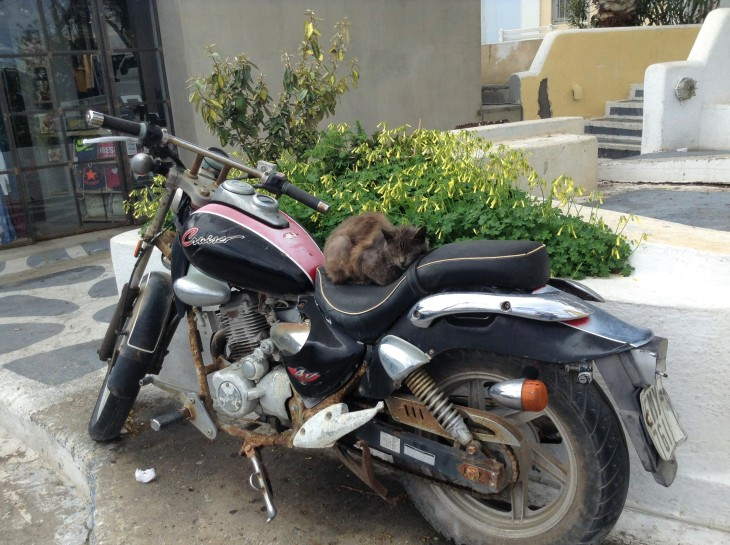 cat on a motorcycle, Santorini