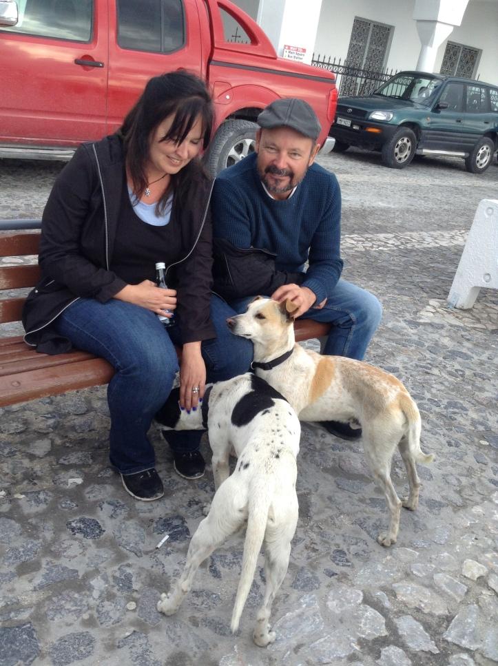 Santorini, dogs