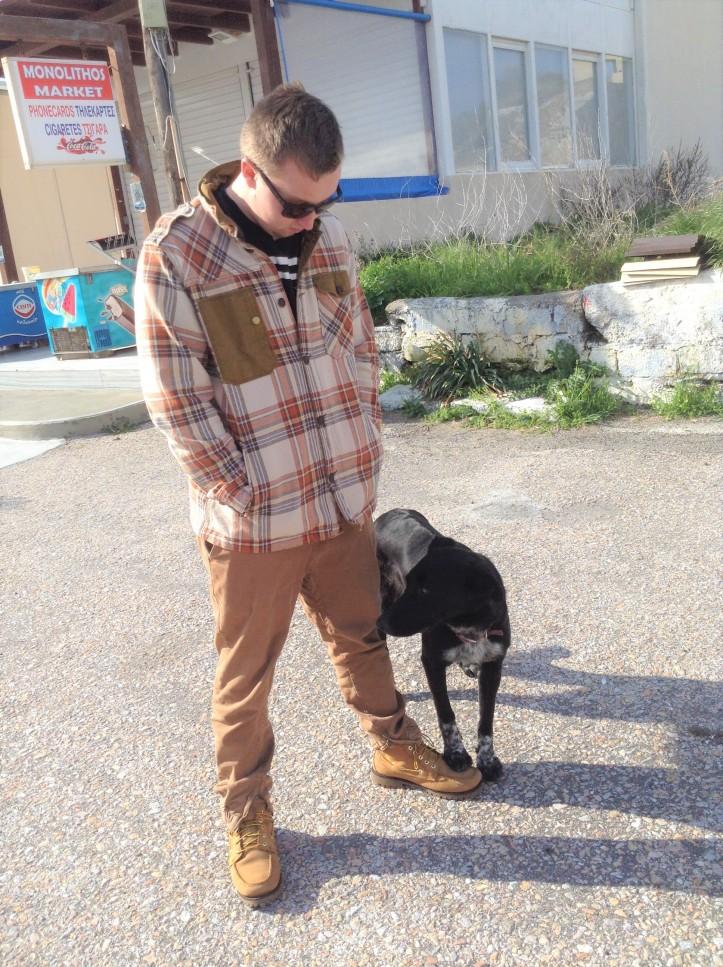 dog, Santorini, adopt, Greece, happy