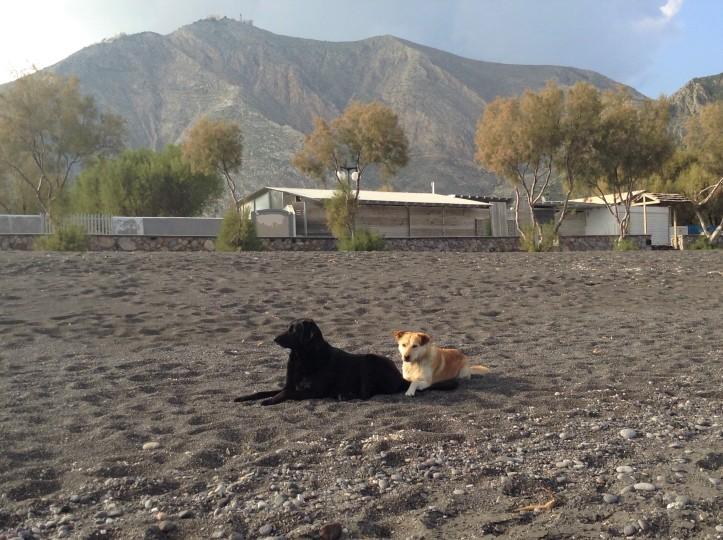 best friends, dogs on beach, Santorini, black beach