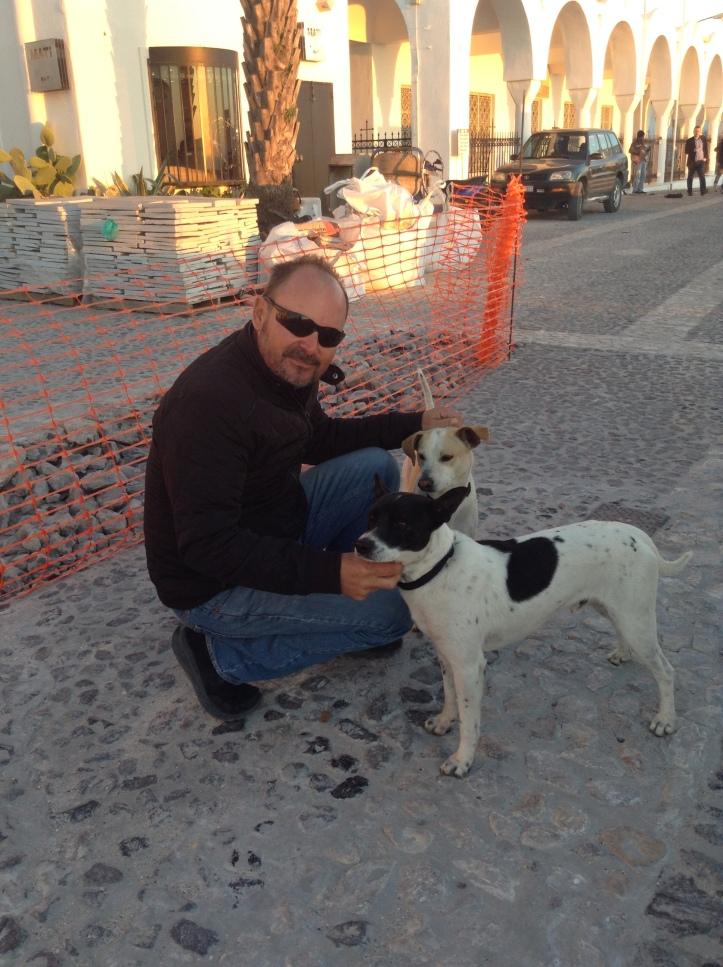 dogs, Santorini, Greece
