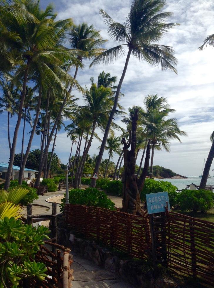 Palm trees, resort, Clifton, Union Island